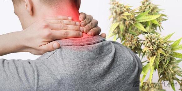CBD contre la douleur